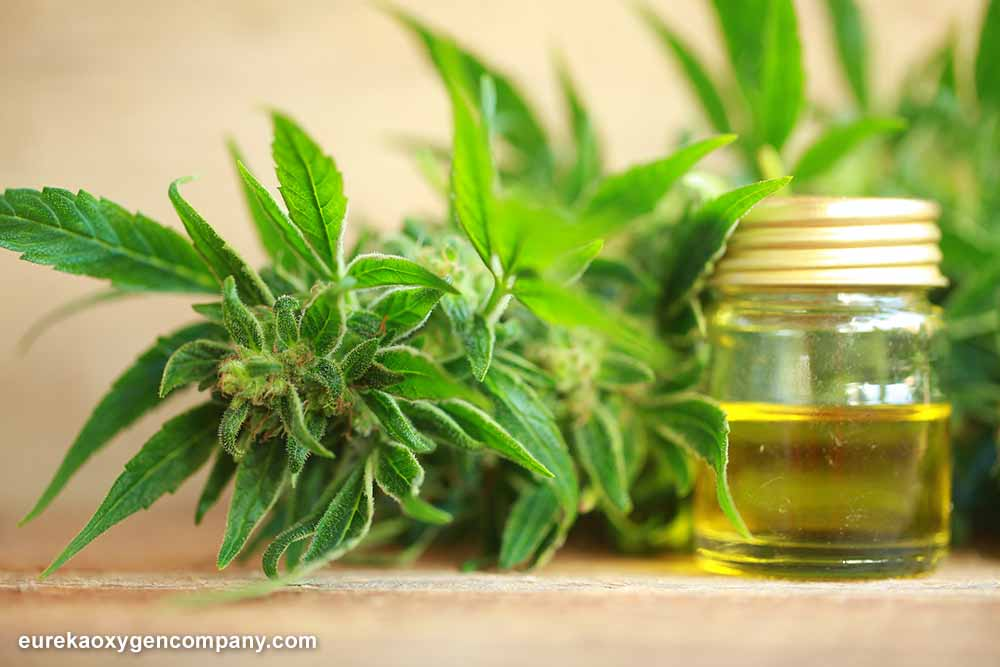 New Trends in CBD Extracts